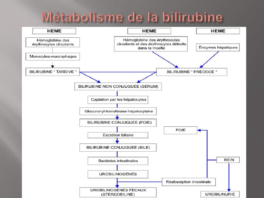 Conduite A Tenir Devant Un Ictere Cholestatique