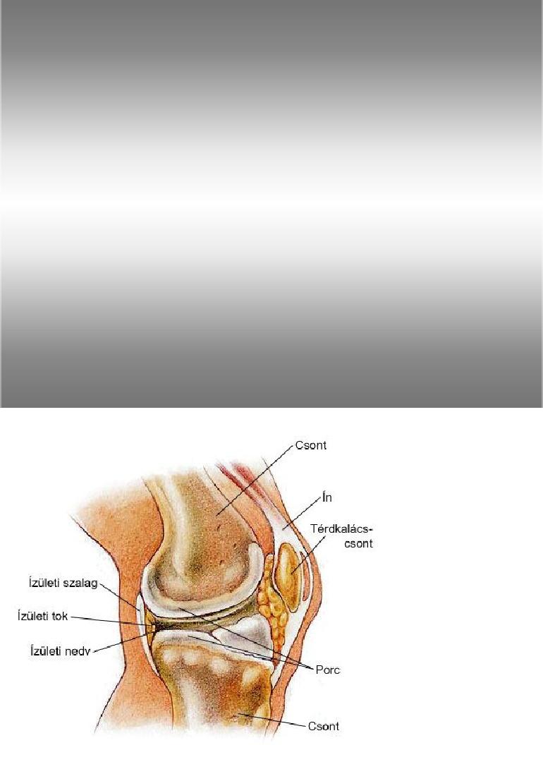a porc személy kötőszövetének felépítése csípőízület ízületi gyulladás tünete