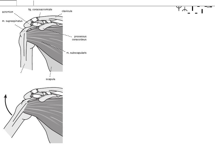 a boka ízületének krónikus synovitisa